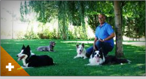 Residencia canina en Antequera