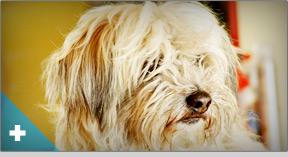 Perro Peluquería canina