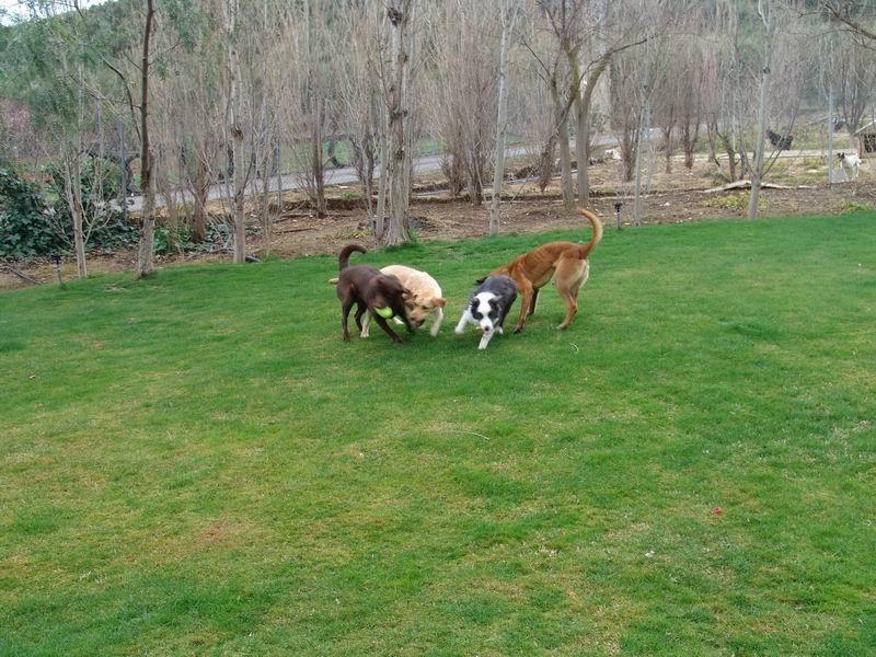 Residencia canina foto 12