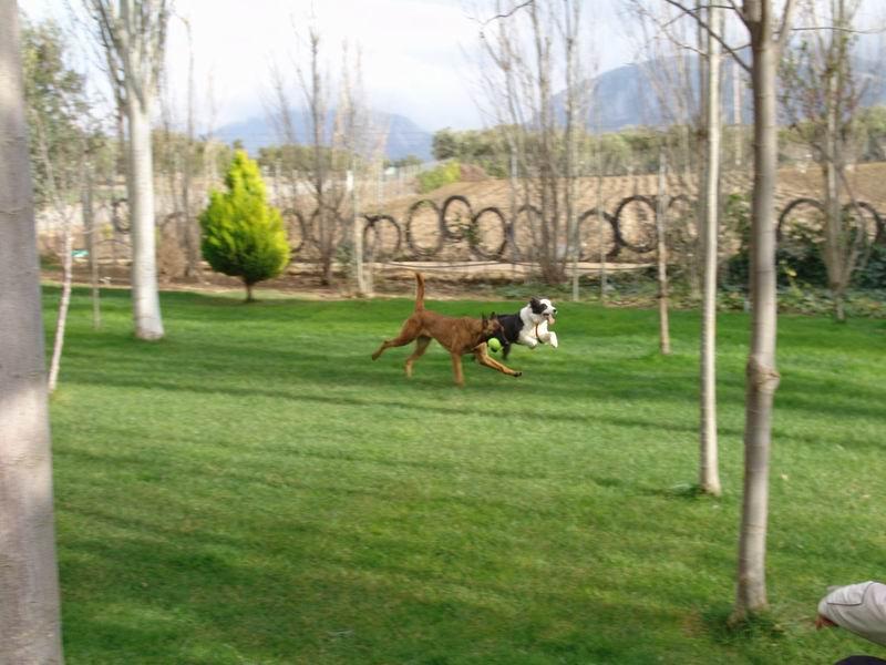 Residencia canina foto 15